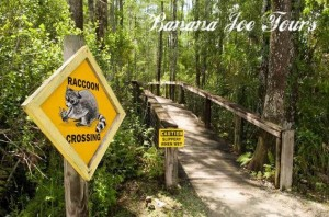Spaziergang in den Everglades