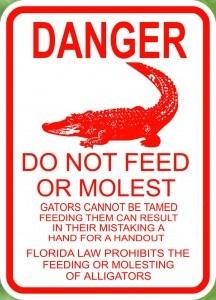 Alligatoren in den Everglades bitte nicht füttern!
