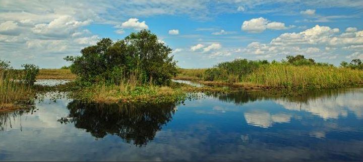 Sumpfgebiet Everglades